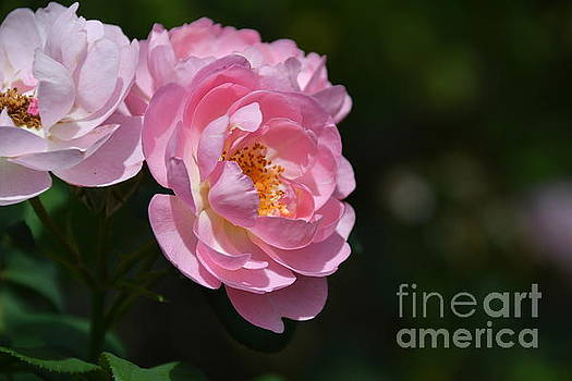 Poetic Romance by Diana Mary Sharpton