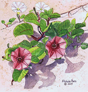 Pohuehue- Beach Morning Glory by Michele Ross