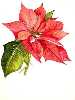 Poinsettia  by Garima Srivastava