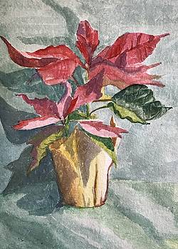 Poinsettia by Katie Cornog