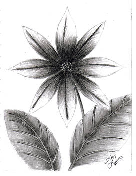 Poinsettia by Lynnette Jones
