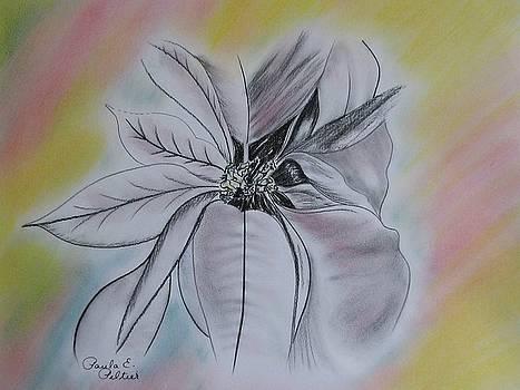 Poinsettia on Pastel by Paula Peltier