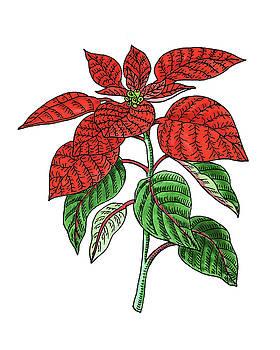 Poinsettia Plant Watercolor by Irina Sztukowski