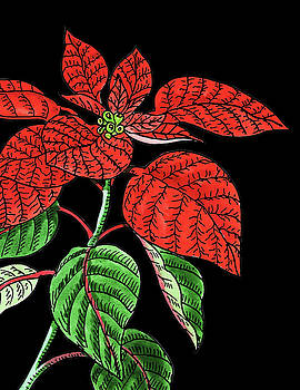 Poinsettia Plant Watercolour  by Irina Sztukowski