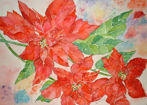 Poinsettia by Sandra Woods