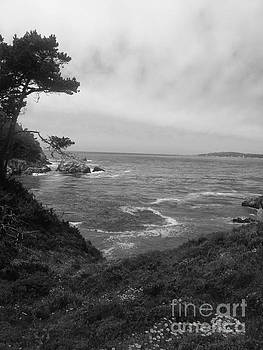 Point Lobos  2 by Chris Berry