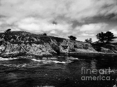 Point Lobos 4 by Chris Berry