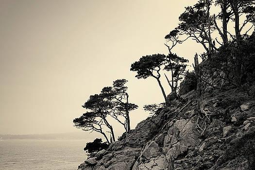 David Gordon - Point Lobos III Toned