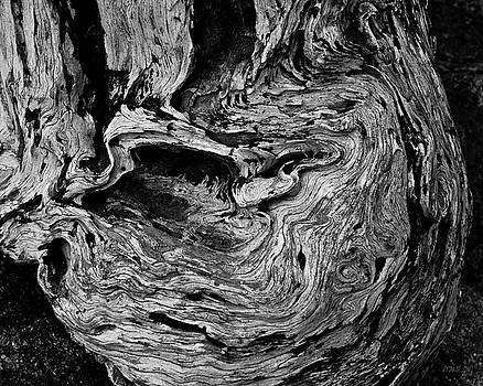 David Gordon - Point Lobos VI BW