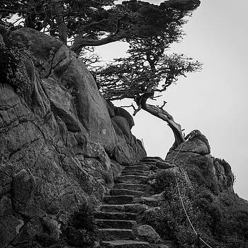 Point Lobos X BW SQ by David Gordon