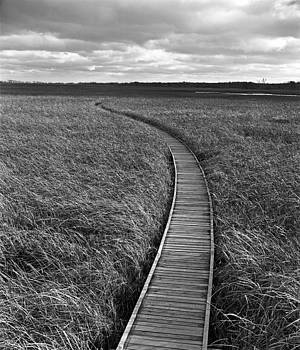 Point Pelee Marshwalk by James Rasmusson