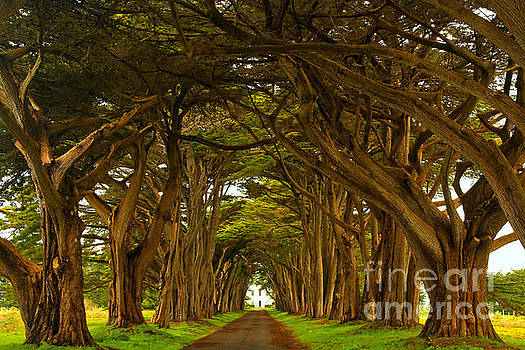 Adam Jewell - Point Reyes Cypress Tunnel