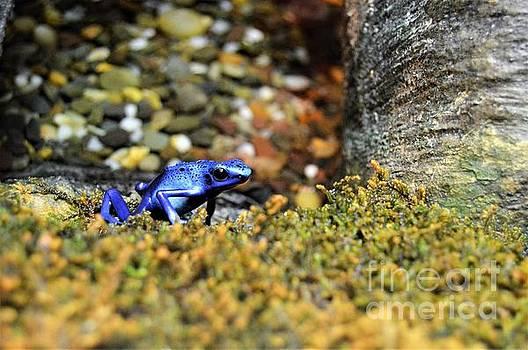 Poison dart Blue Frog by Brigitte Emme