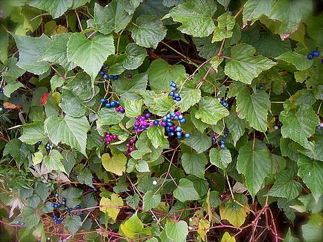 Poisonous Snozzberries by Jacqueline Cappadora