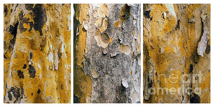 Lynn Palmer - Poisonwood Bark Tryptich