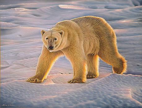Polar Bear at sunset - Wapusk National Park. by Eric Wilson