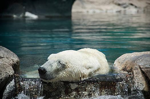 Mary Lee Dereske - Polar Bear Bliss