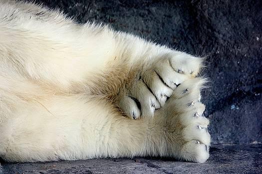 Polar Bear Paws by Sarah Lilja