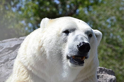 Polar Bear Portrait by Jasmin's Treasures