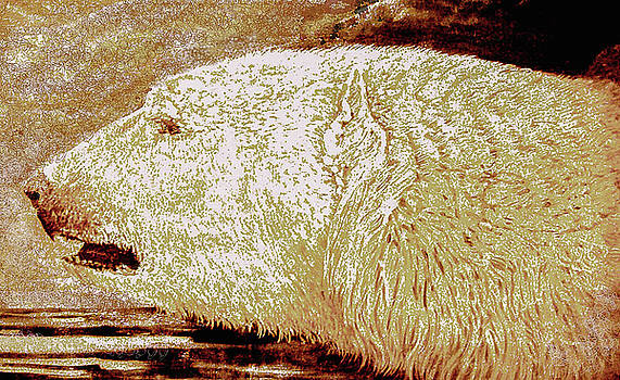Polar Bear by Ross Longul