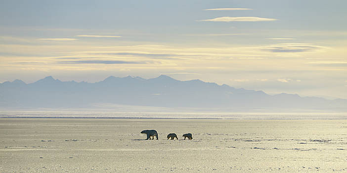 Reimar Gaertner - Polar Bear sow and cubs silhouetted on Kaktovik Lagoon Alaska wi