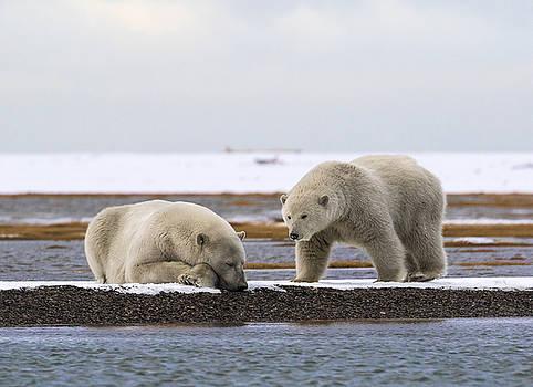 Polar Bear Zzzzzzz's by Cheryl Strahl