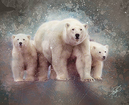Polar Bears by Tom Schmidt