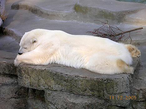 Polar Nap by Carolyn Donnell