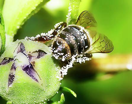 Pollen Bee by Scott Cordell