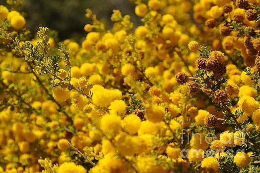 Pollen by Oscar Moreno