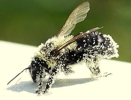 Pollen Overload by Lori Pessin Lafargue