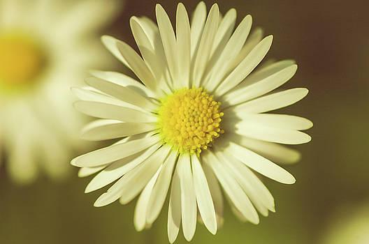 Pollen by Wayne Stadler