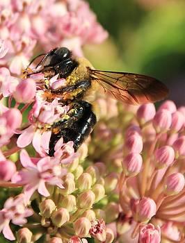 Springtime Pollination by Karin Kohlmeier