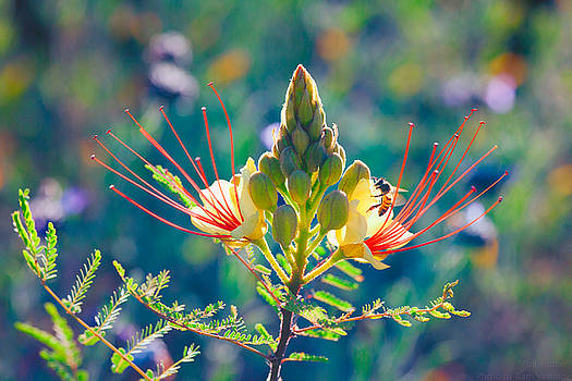 Pollination by Ram Vasudev