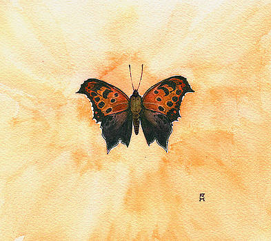 Polygonia Comma by Katherine Miller