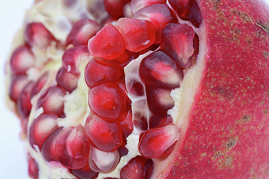 Pomegranate by Frank Tschakert