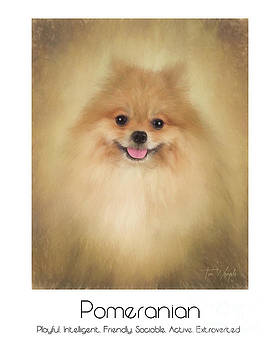 Pomeranian Poster by Tim Wemple