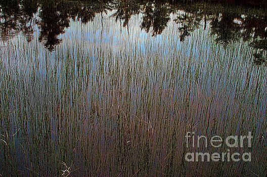Pond Abstract by Randy Pollard