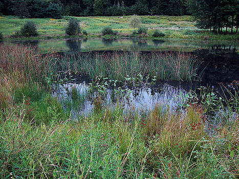 Pond at Twin Brooks by Linda Clearwater