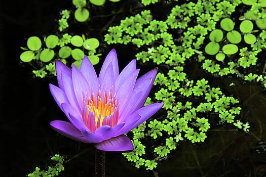 Pond Beauty by Grace Dillon