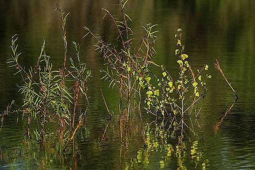 Pond color by David March