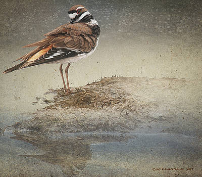 Pond Killdeer Study by R christopher Vest