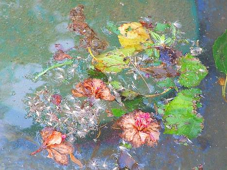 Pond Life by Bill Vernon