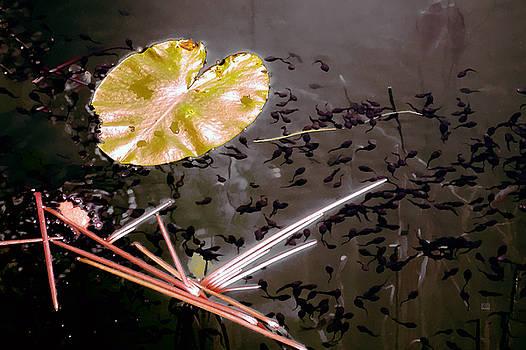 Pond Life by Menega Sabidussi