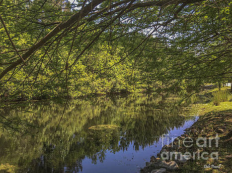 Dale Powell - Pond Reflections in Mount Pleasant SC