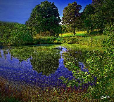 Pond Reflections by Julie Grace