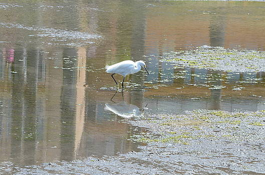 Pond Reflections by Kathy Vilim