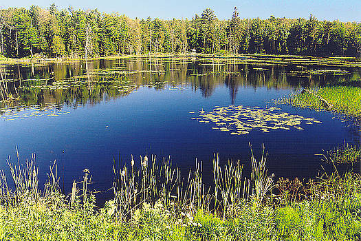 Pond to Ponder by Greg Taylor