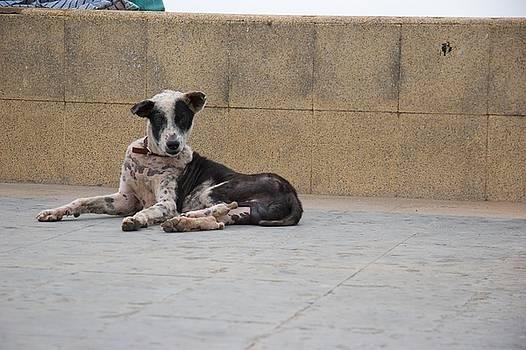 Pondicherry Dog One by David Riccardi
