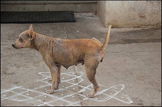 Pondicherry Dog Two by David Riccardi